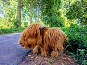 brienenoord eiland scottish highlander rotterdam zuid