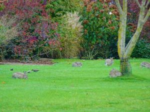dakpark bunnies konijnen woonboulevard rotterdam west